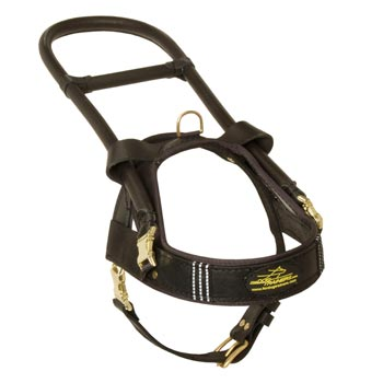 English Pointer Leather Guide Harness with ID Patches