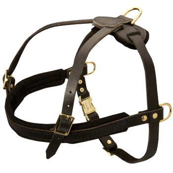 Leather English Pointer Harness for Dog Off Leash Training