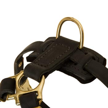 D-ring on Leather English Pointer Harness for Puppy Training