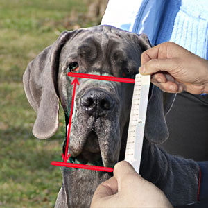 Please, easure your dog's muzzle height